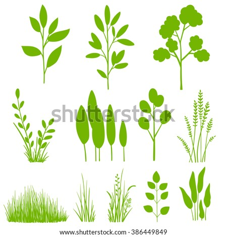 Vector set of plants, leaves, trees. Botanical clip art, graphic design elements