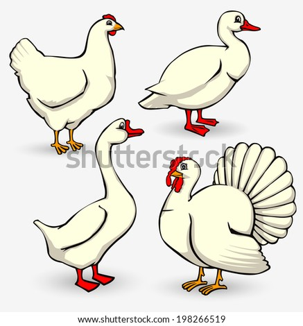 vector  set of poultry on the farm isolated on white - stock vector