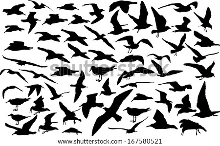 Vector set of silhouettes of 60 flying seagulls  - stock vector