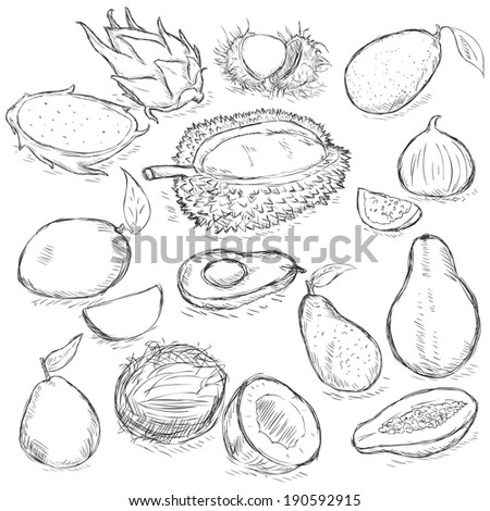 Vector Set of Sketch Exotic Fruits - stock vector
