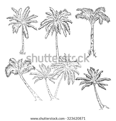 Vector Set of Sketch Palm Trees - stock vector