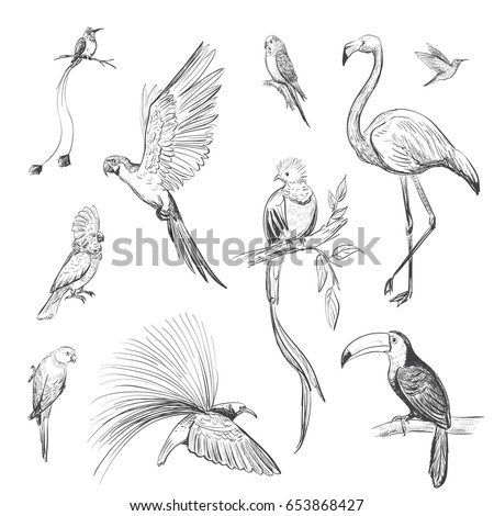 vector set of sketches of beautiful exotic birds of the amazon rain forest