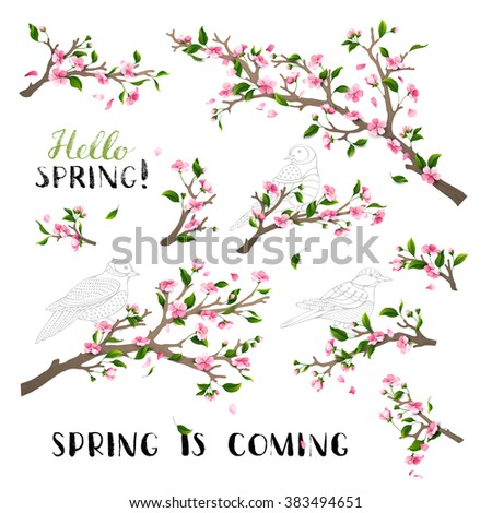 Vector set of spring blanches isolated on white background. Blossoms and leaves on tree branches. Hand-written brush lettering. Bird contours. Hello spring! Spring is coming.  - stock vector