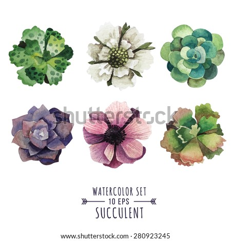 Vector set of succulents and flowers in watercolor style. Flowers poppies and succulents. Image for postcards, covers, invitations and other products. - stock vector