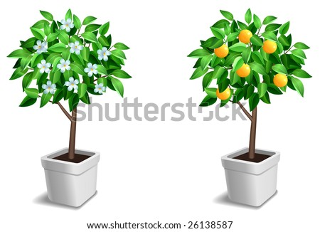 Vector set of two little tree.