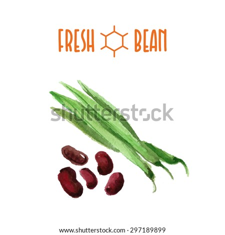 Vector set of watercolor beans elements isolated on white background. Cute artistic green bean illustration good for magazine or recipe book, poster and card design, menu cover. - stock vector