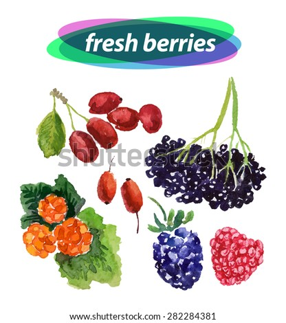 Vector set of watercolor berries elements on white background. Cute illustration is good for magazine or book, poster and card design, menu cover. - stock vector