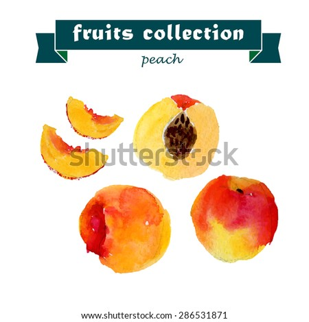 Vector set of watercolor peach elements on white background. Cute illustration is good for magazine or book, poster and card design, menu cover. - stock vector