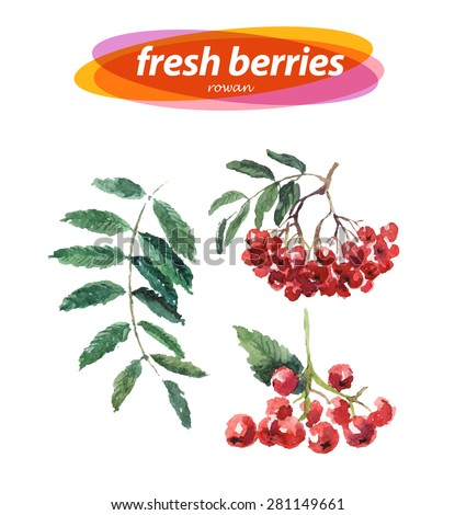 Vector set of watercolor rowan berries and branches on white background. Cute illustration is good for magazine or book, poster and card design. - stock vector