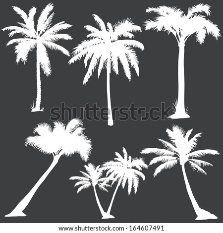 vector set of  white palms silhouettes  - stock vector