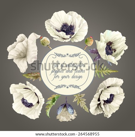 Vector set of white poppies, buds, leaves for design. Watercolor flowers, leaves. Set of floral elements to create compositions.  - stock vector