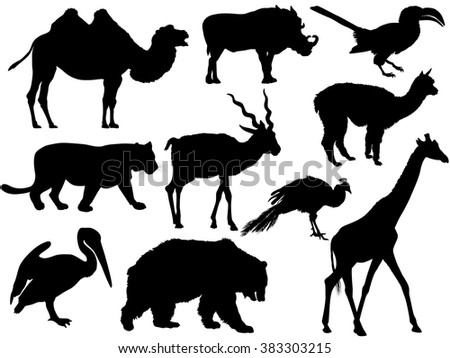vector set of wild animal silhouettes (camel, wild boar, bird, Parrot, Bobcat, Lion, Tiger, Antelope, alpaca, Lama, Peacock, giraffe, bear, Grizzly, cormorant)