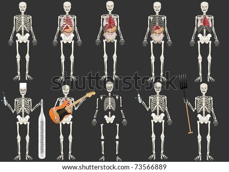 Vector set  the Skeleton of the person - stock vector