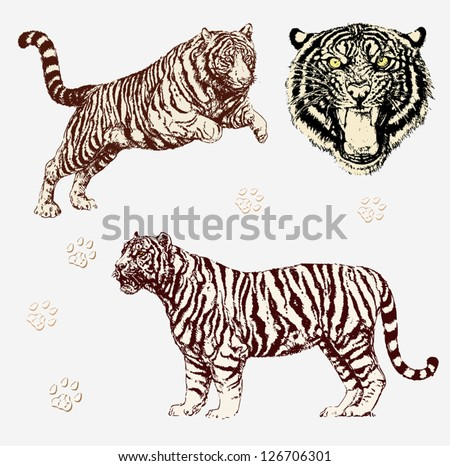 Vector Set: Tiger shapes and head - stock vector