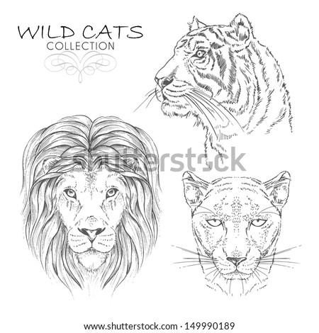 Vector Set, Wild Cats Collection - stock vector