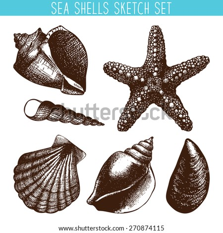 Vector set with hand drawn sea shell sketch isolated on white. Vintage shells with engraving elements collection.  - stock vector