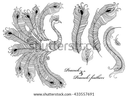 Vector set with ornate peacock and peacock feathers in black isolated on white background. Ornamental bird and outline feathers for coloring book. Decorative elements in contour style for design.  - stock vector
