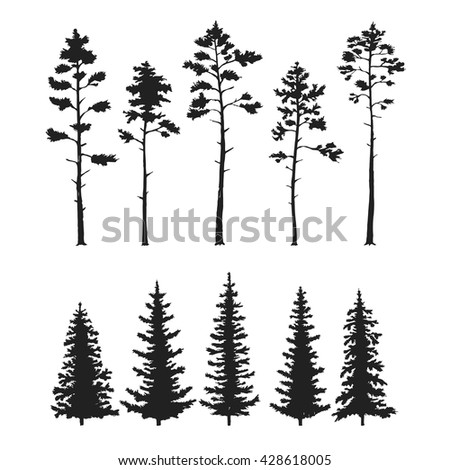 Vector set with pine trees isolated on white background. - stock vector