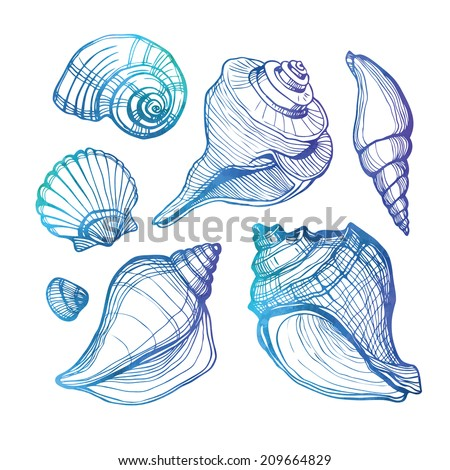 Vector set with sea shell isolated on white. Vector illustration. Watercolor. - stock vector