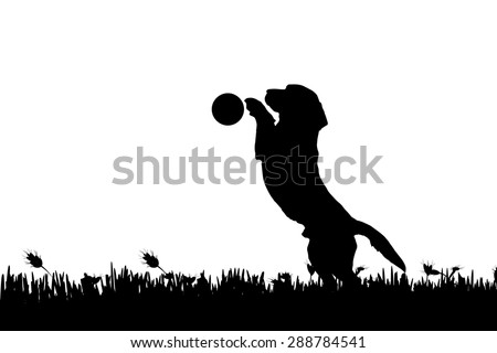 Vector silhouette of a dog in nature. - stock vector