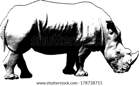 Vector silhouette of an African White Rhinoceros scientifically known as Ceratotherium Simum. - stock vector