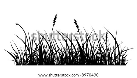 vector silhouette of grass on white background - stock vector
