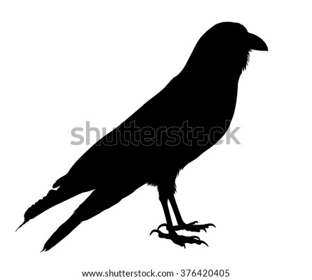 Silhouette Bird Wagtail Standing Stock Vector 161177357 ...