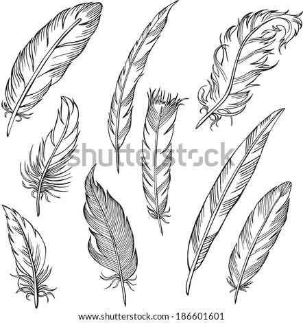 vector silhouettes of different feathers  - stock vector
