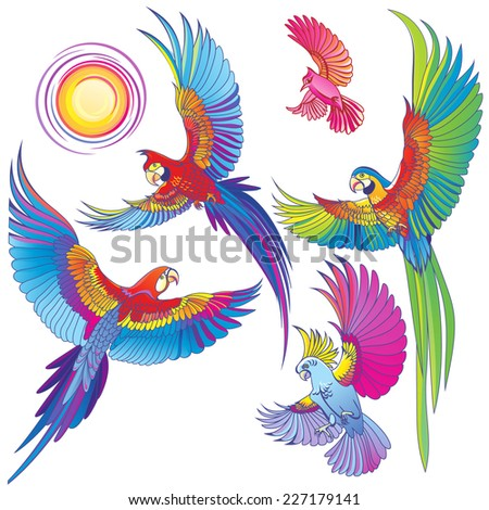 Vector silhouettes of tropical parrots. - stock vector