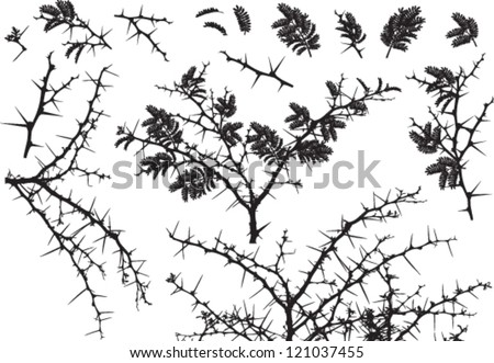 Vector Silhouettes of various Acacia branches with leaves and thorns - stock vector