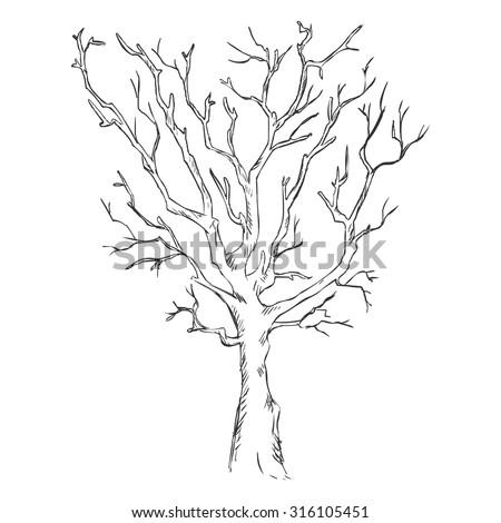 Vector Single Sketch Bare Tree - stock vector