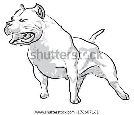 Pit Bull Head Illustration Stock Images, Royalty-Free ...
