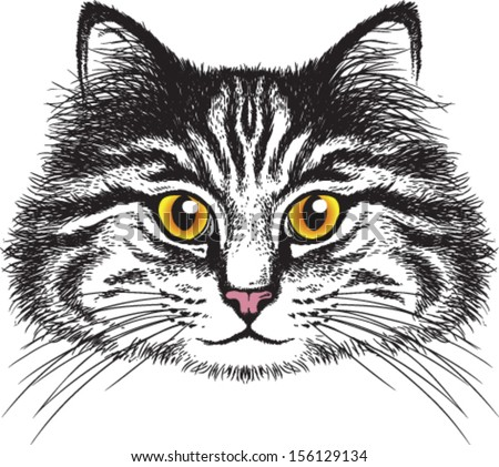 Vector Sketch Longhaired Tabby Cats Face Stock Vector 156129134 - Shutterstock