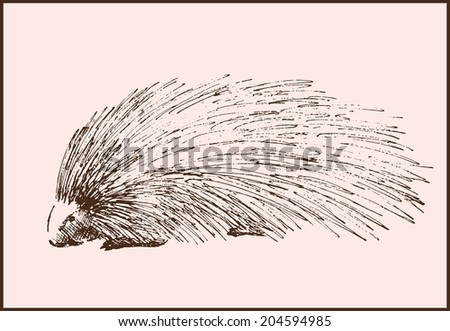 vector sketch of a porcupine made by hand - stock vector
