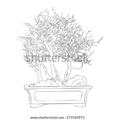 Vector sketch of bonsai. Hand draw illustration. - stock vector