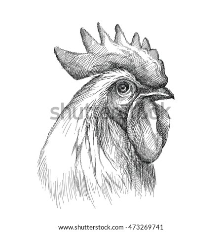 vector sketch of rooster or cock head profile in black isolated on white background silhouette