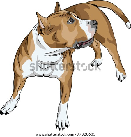 vector sketch of the dog American Staffordshire Terrier breed - stock vector