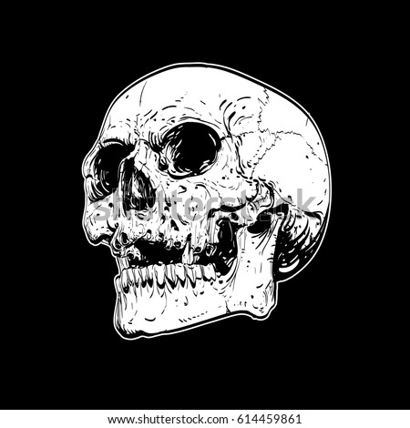 Vector skull artwork human skull on isolated black background