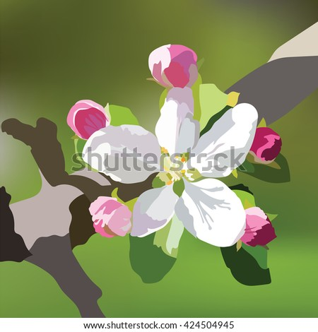 Vector Spring Apple or Cherry flowers blossom tree branch. Beautiful natural blooming flower illustration. Watercolor realistic technique - stock vector