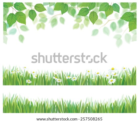 Vector spring birch tree leaves, grass and daisy flowers  borders isolated. - stock vector