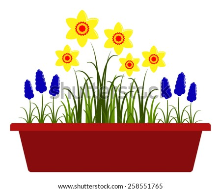 vector spring flowers in planter isolated on white background