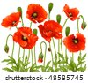 Vector spring flowers: poppy - stock vector