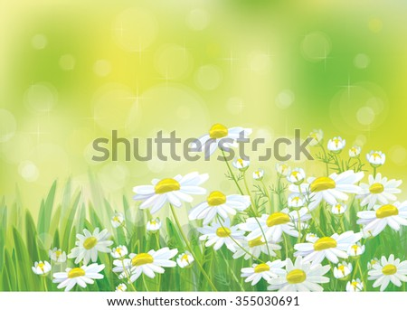 Vector spring landscape, beautiful chamomiles flowers. - stock vector
