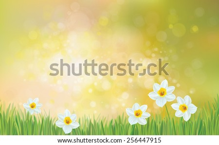 Vector spring nature background, daffodil flowers. - stock vector