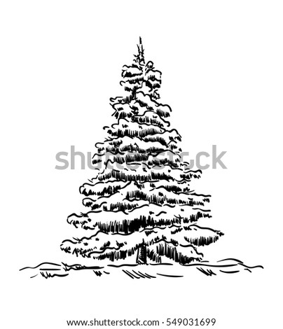vector - spruce tree at winter time
