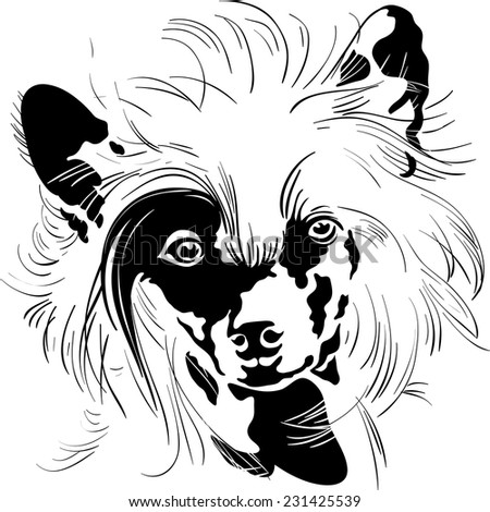 Vector Sweet dog Chinese Crested breed hand drawing vector - stock vector