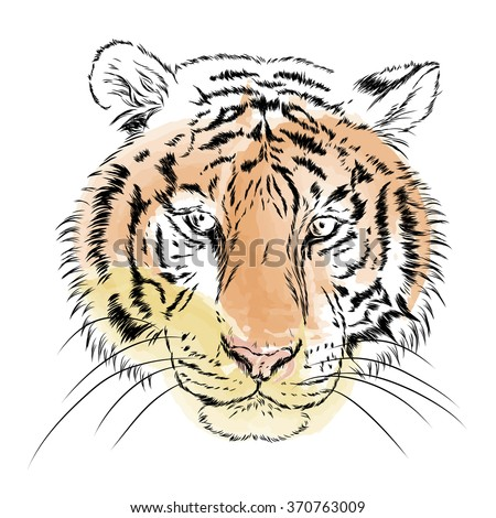 Vector tiger. Watercolor. Vector illustration for greeting card, poster, or print on clothes.