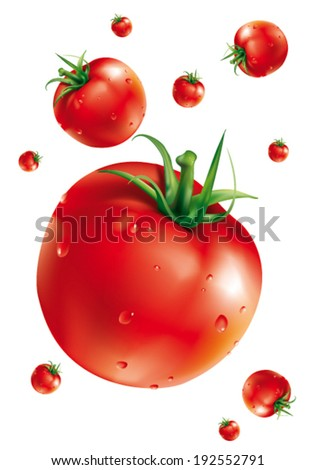 vector tomatoes - stock vector