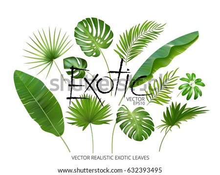 Vector tropical exotic leaves, realistic jungle leaves set isolated on white background. Palm leaf collection. Quality watercolor imitation. Not trace.