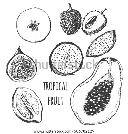 vector tropical fruit set - fig, papaya, dragon fruit, pitaya, lemon, apple, lychee. exotic fruit flat lay drawing